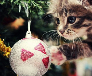 cat, christmas, and animal image
