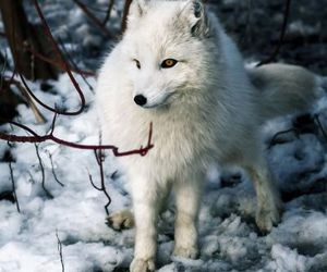 foxes, inspiration, and nature image
