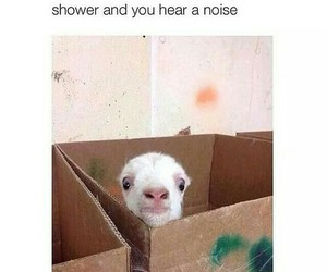 funny, lol, and shower image