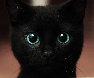 black, chat, and cute image