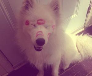 dog, kiss, and cute image
