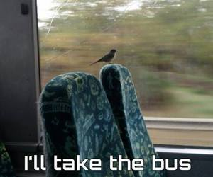 bird, funny, and bus image