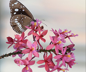 beauty, butterfly, and flower image