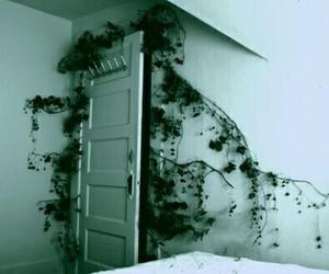 plants, nature, and door image