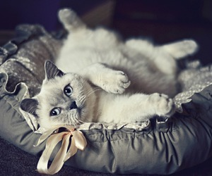 cat, photography, and cute image
