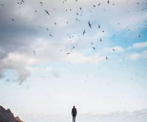 bird, nature, and sky image