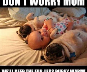 baby, dog, and funny image