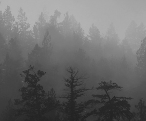 black and white, nature, and forest image