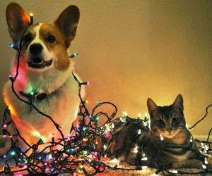 dog, cat, and christmas image