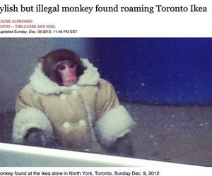canada, monkey, and love image