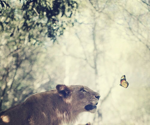 lion, animal, and butterfly image