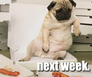 funny, cute, and diet pug image