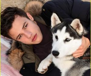 cameron dallas, dog, and boy image