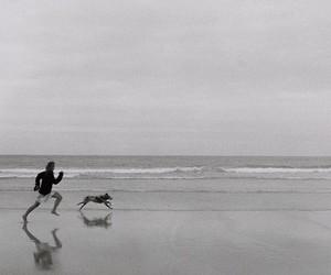 beach, dog, and run image