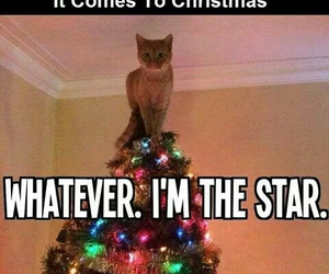 cat, christmas, and lol image