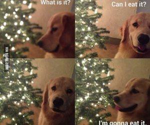 dog, funny, and christmas image