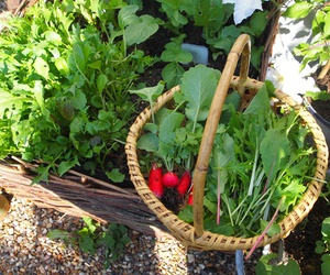 garden and vegetable image