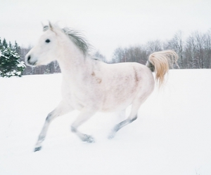 animals, snow, and winter image