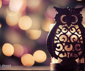 owl, light, and winter image