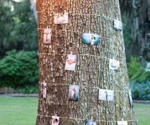 wedding and tree image