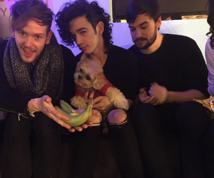 the 1975, dog, and ross macdonald image