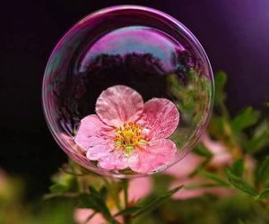 bubbles, flowers, and pink image