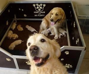 dog, animal, and family image