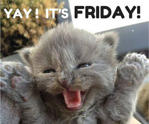 friday, cat, and cute image