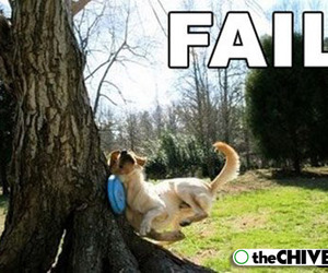 dog, funny, and hillarious image