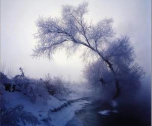 christmas, natural, and morning image