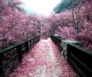 cool, pink, and nature image