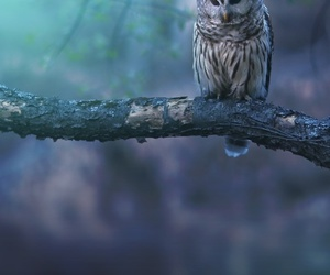 owl, animal, and nature image
