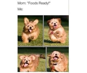 funny, food, and dog image