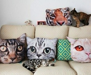 animal, cat, and house image