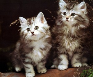 animal, cat, and kitten image