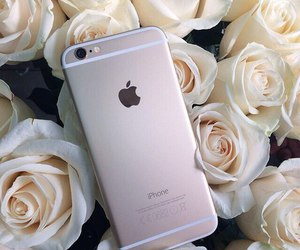 apple, roses, and flowers image