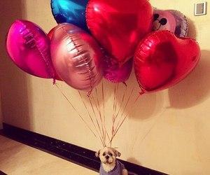 dog and balloons image