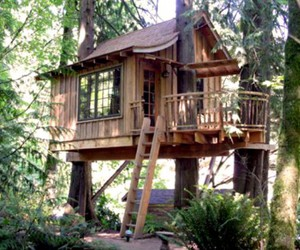 tree, inspiration, and treehouse image