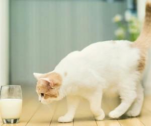 cat, milk, and cute image