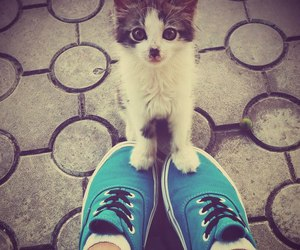 cat, blue, and shoes image