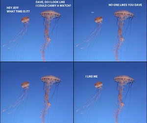 dave, funny, and jellyfish image
