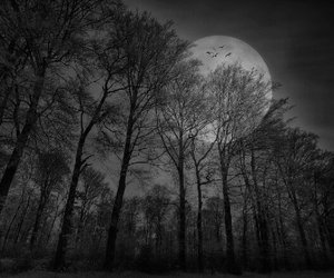 tree, moon, and landscape image