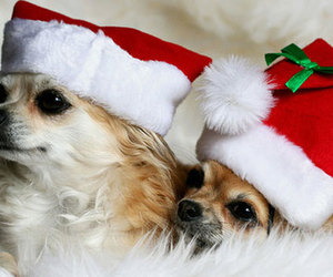 dogs, christmas, and cute image