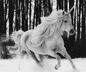 unicorn, horse, and snow image