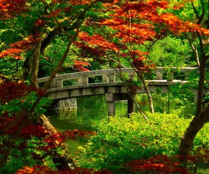 autumn, cool, and green image