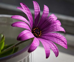 nature, cool, and flower image