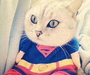 cat and superman image