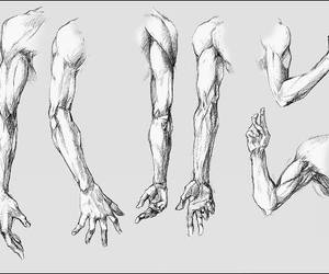 sketch, anatomy, and drawing image
