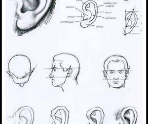 ear, art, and drawing image