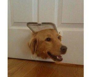 food, dog, and funny image